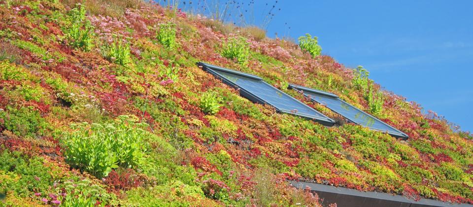 Projectafbeelding Subsidies voor Groene Daken